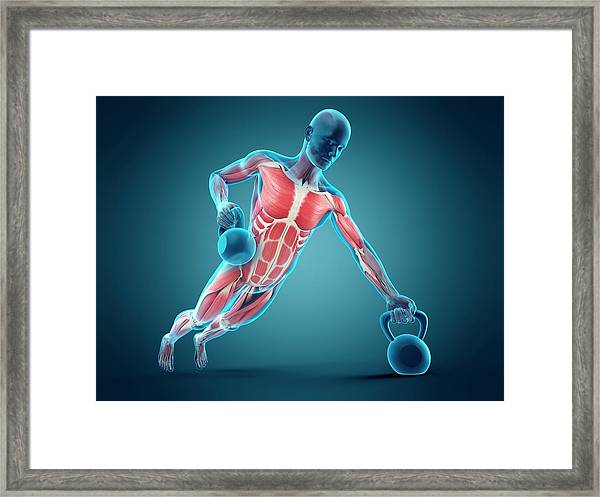 Person Lifting Kettle Bell Framed Print by Sebastian Kaulitzki/science Photo Library