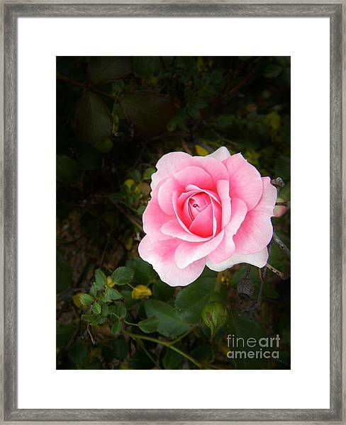 Personally Pink Framed Print