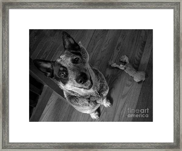 Pet Portrait - Forrest Framed Print