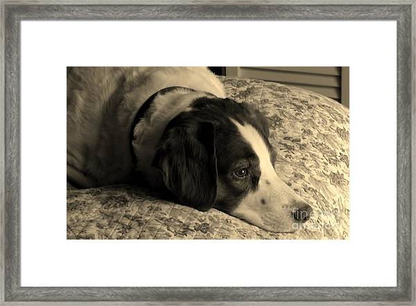 Pet Portrait-waiting For Mom Framed Print