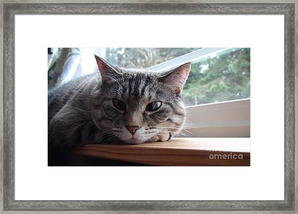 Pet Portrait - Lily The Cat Framed Print