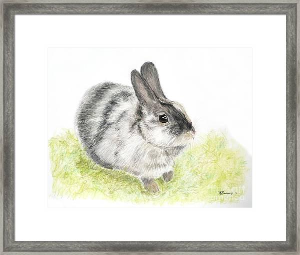 Pet Rabbit Gray Pastel Framed Print