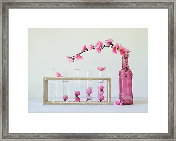 Petal Collecting Framed Print