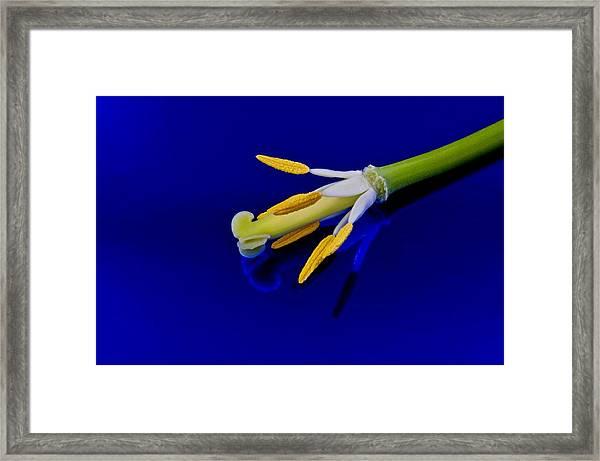 Petal-less Flower On Bright Blue Framed Print