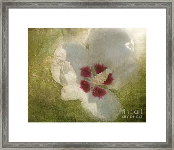 Petals In Shadows Framed Print