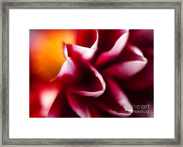 Petals Of An Aster Framed Print