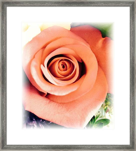 Petals Of Peach Framed Print