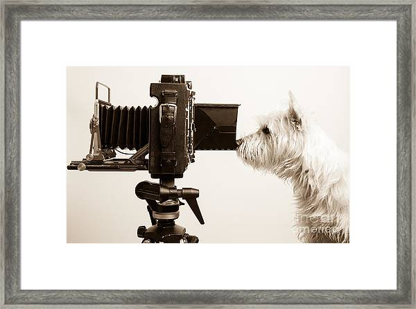 Framed Print featuring the photograph Pho Dog Grapher by Edward Fielding