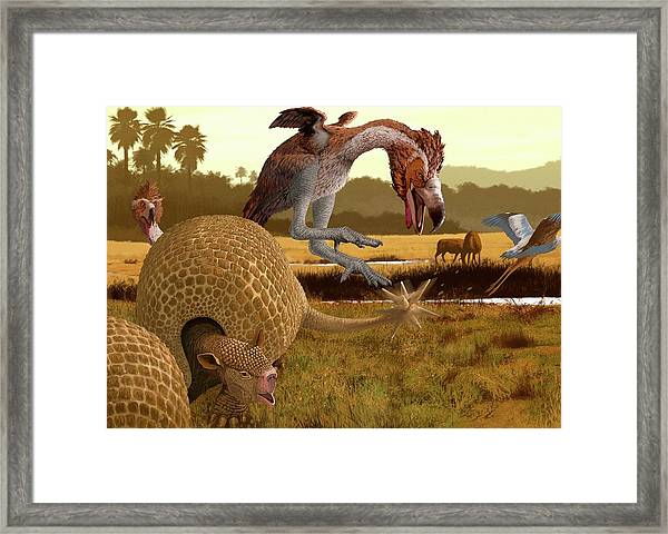 Phorusrhacos Framed Print by Jaime Chirinos/science Photo Library