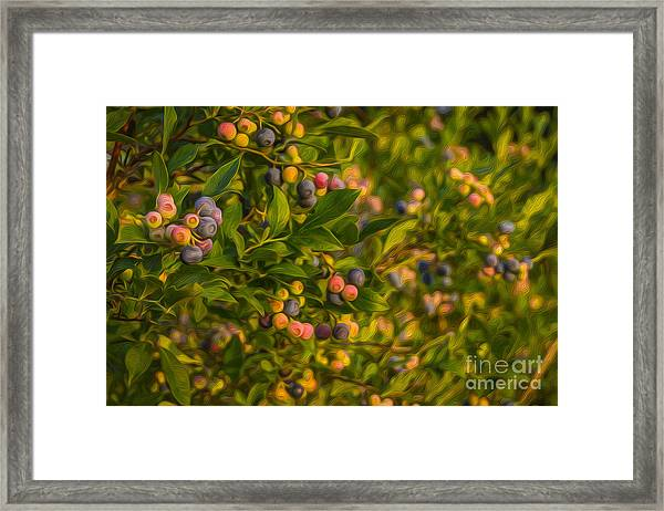 Pickin Blueberries Framed Print