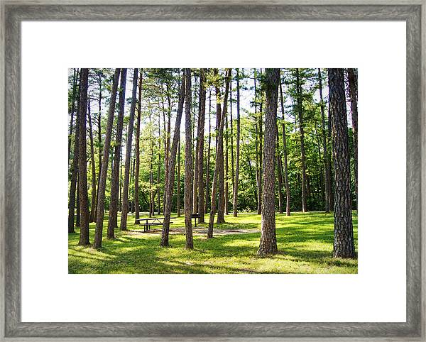 Picnic In The Pines Framed Print