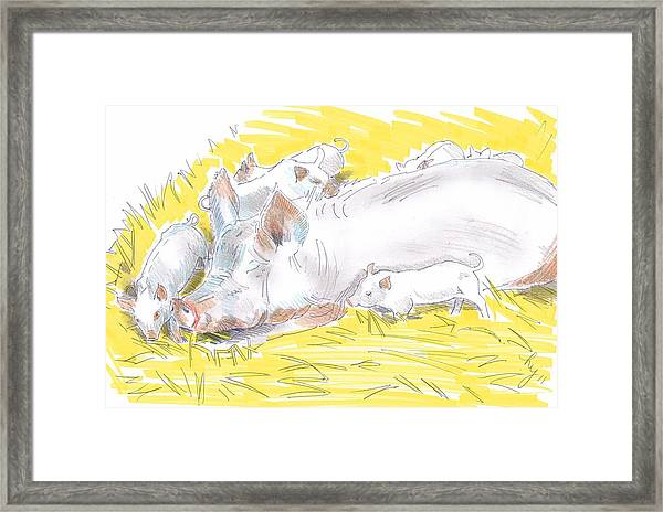 Pig Sow And Piglets Framed Print