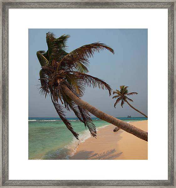 Pigeon Cays Palm Trees Framed Print