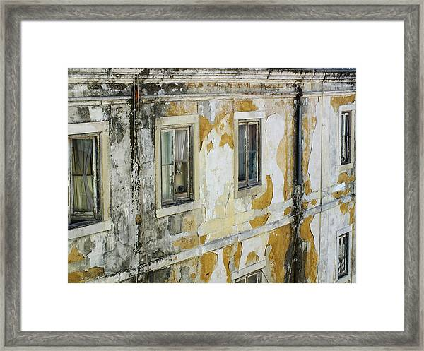 Pigeon In The Window Framed Print