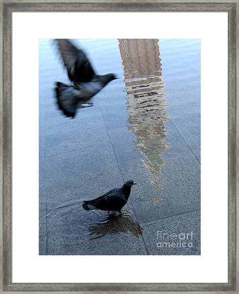 Pigeons In Piazza San Marco. Venice. Italy. Framed Print