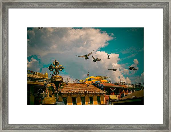 Framed Print featuring the photograph Pigeons Near Monastery In Boudnath Kathmandu by Raimond Klavins