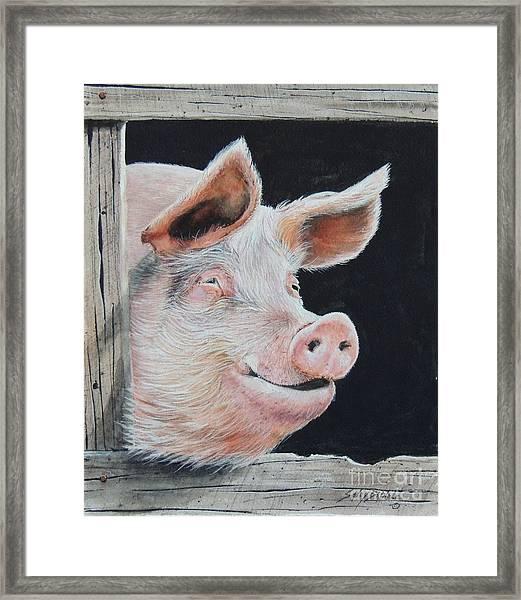 Piggy.  Sold  Framed Print