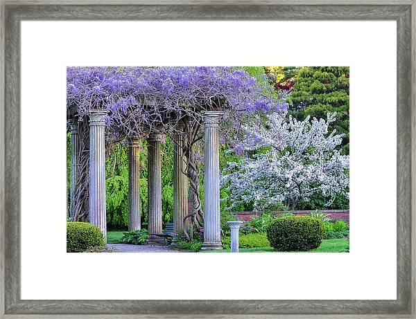 Pillars Of Wisteria Framed Print