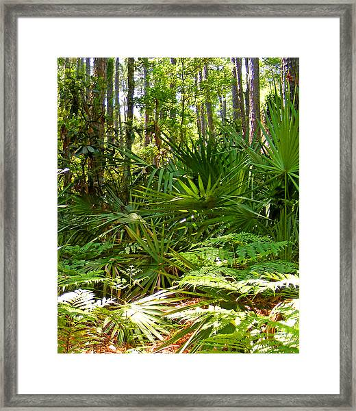 Pine And Palmetto Woods Filtered Framed Print