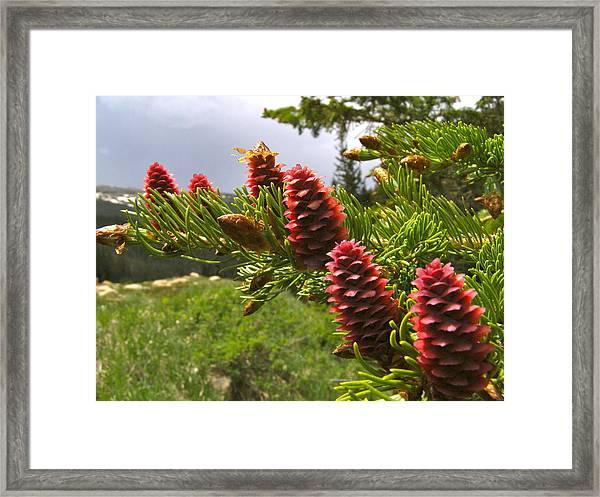 Pine Forest Sense  Framed Print