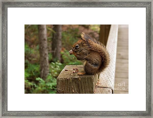 Pine Lunch Framed Print