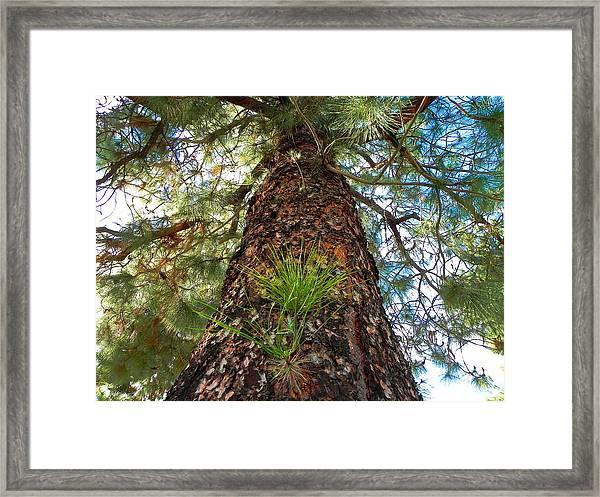 Pine Tree Tower Framed Print
