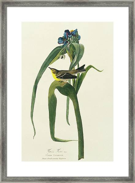 Pine Warbler Framed Print by Natural History Museum, London/science Photo Library