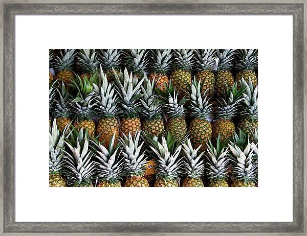 Pineapples  Framed Print
