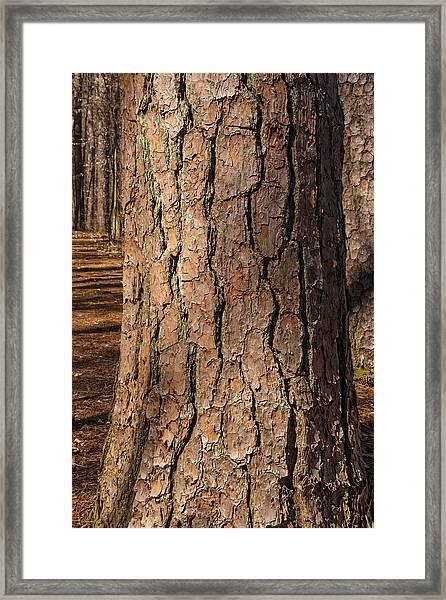 Pinebark Framed Print