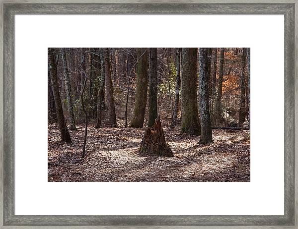 Pinetrees 1 Framed Print