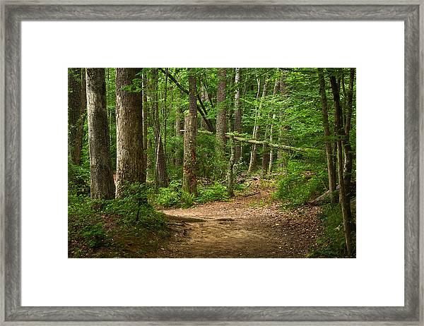 Pinewood Path Framed Print