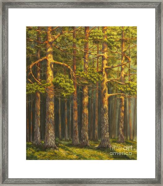Pinewood Framed Print