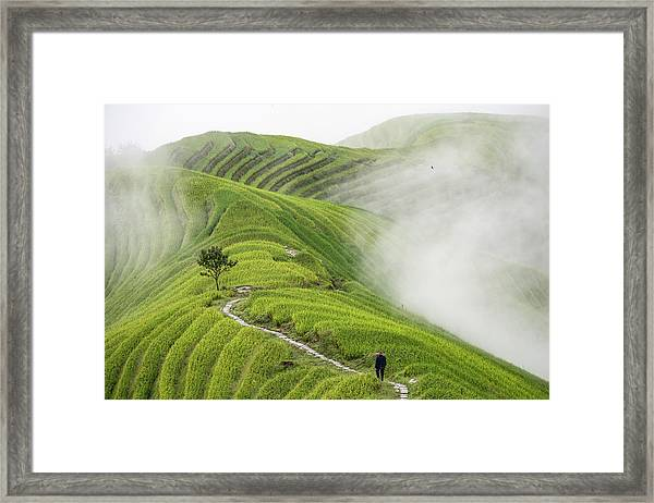 Ping'an Rice Terraces Framed Print