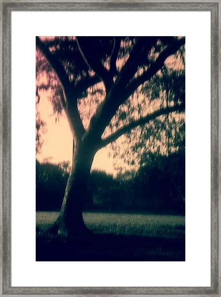 Pinholed Park Framed Print