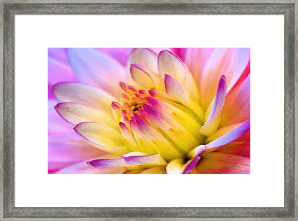 Pink And White Water Lily Framed Print