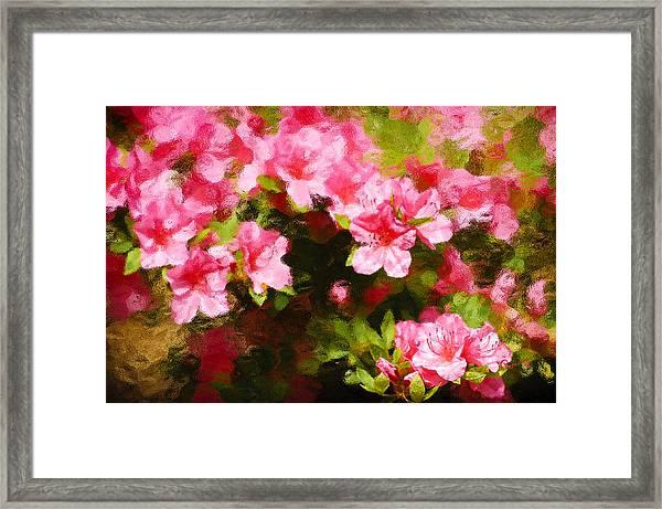 Pink Azealas Framed Print