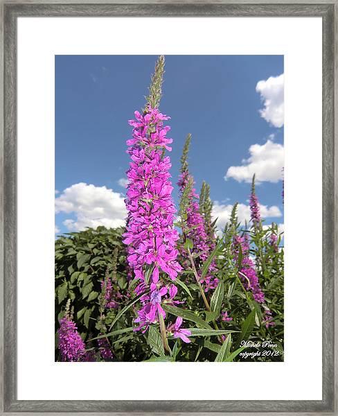 Pink Brilliance Framed Print