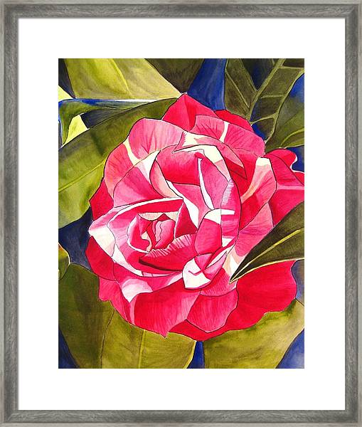 Pink Camellia Framed Print by Sacha Grossel