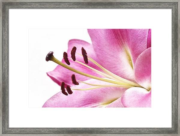 Pink Curves Framed Print