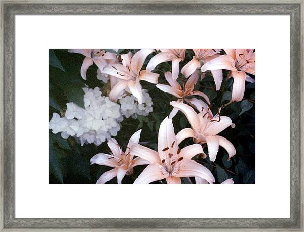 Pink Daylilies Framed Print