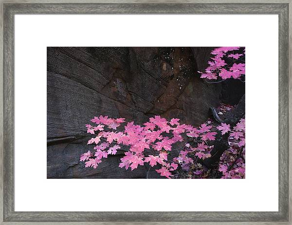Pink Fall Colors In Sedona Arizona Framed Print