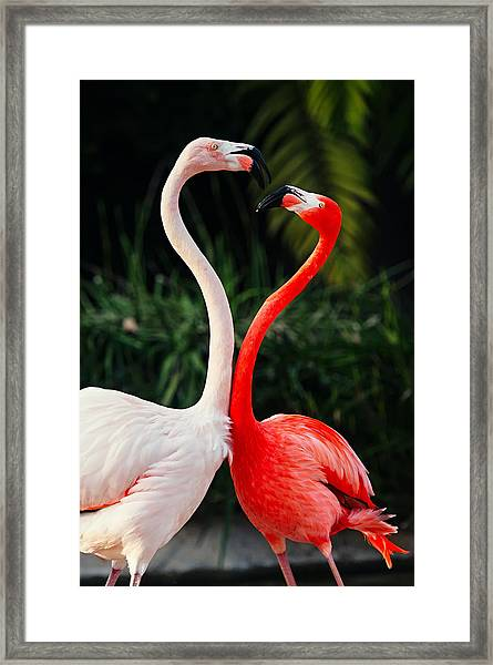 Pink Flamingos - Who's The Boss? Framed Print