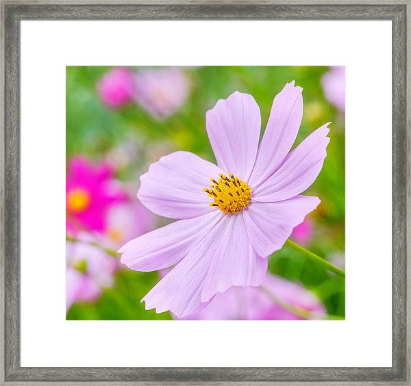 Framed Print featuring the photograph Pink Flower  by Garvin Hunter
