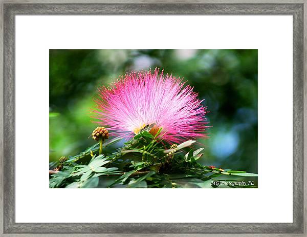 Pink Fluff Framed Print