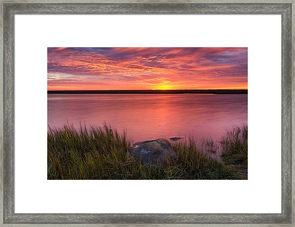 Pink Marsh Framed Print