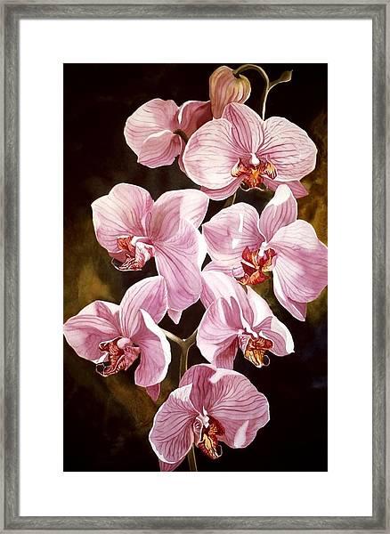 Pink Phalaenopiss Orchids Framed Print