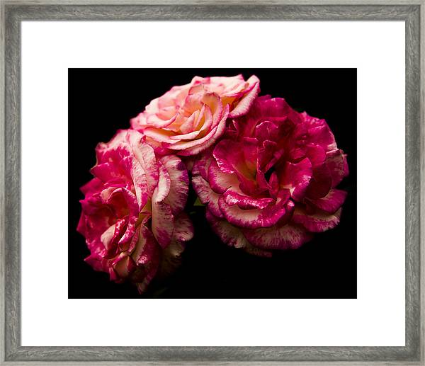 Pink Solitude Framed Print