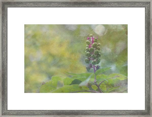 Pink-stemmed Plant Framed Print