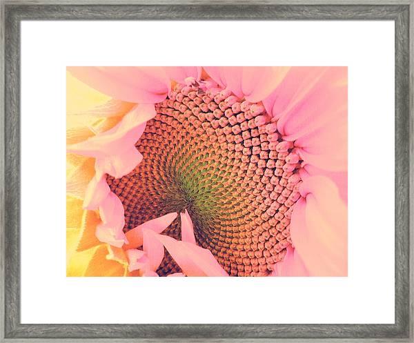 Pink Sunflower Framed Print