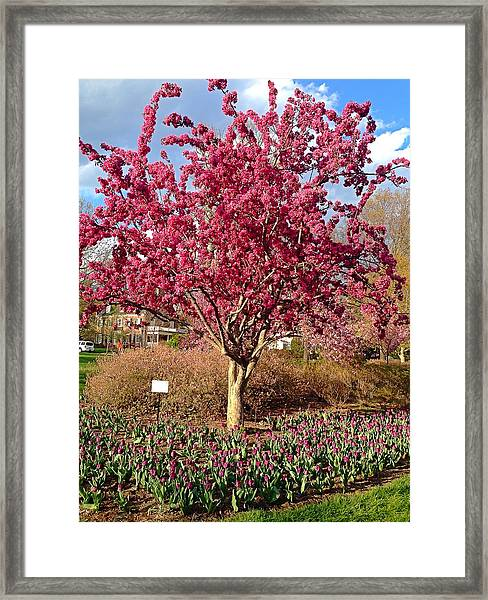 Pink Tree Framed Print